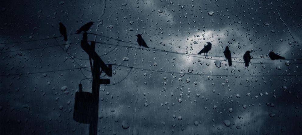 Foto: ¿Es verdad que internet se ralentiza cuando llueve?