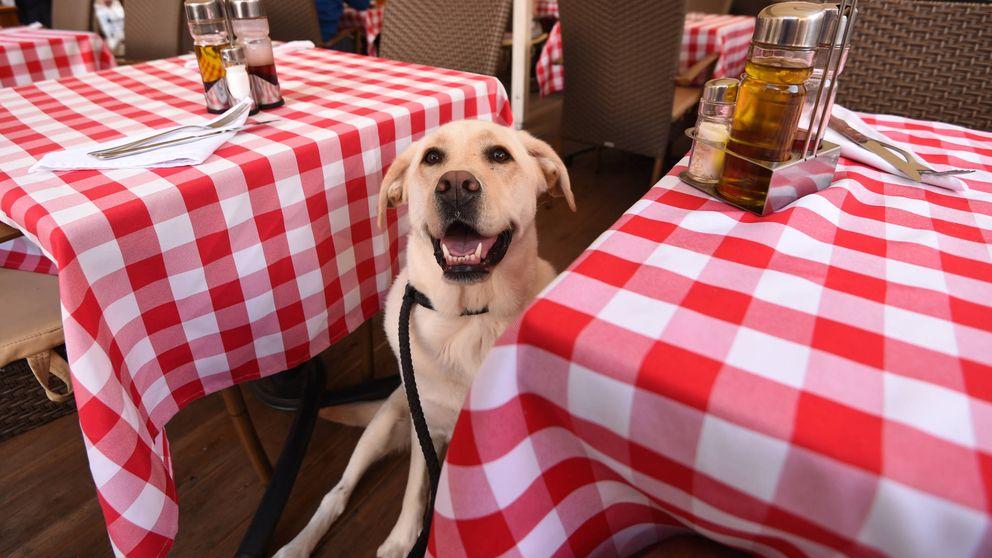 Los restaurantes en los quete permiten llevar a tu perro