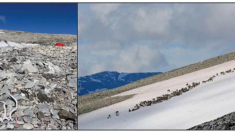 Restos de renos en el parche de hielo. (The Holocene)
