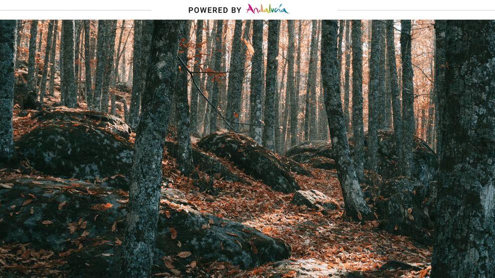 Cuatro planes para escaparte a Andalucía este otoño
