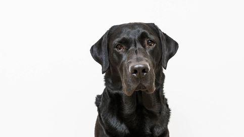 Un perro entra solo y herido a una clínica veterinaria de Brasil pidiendo ayuda