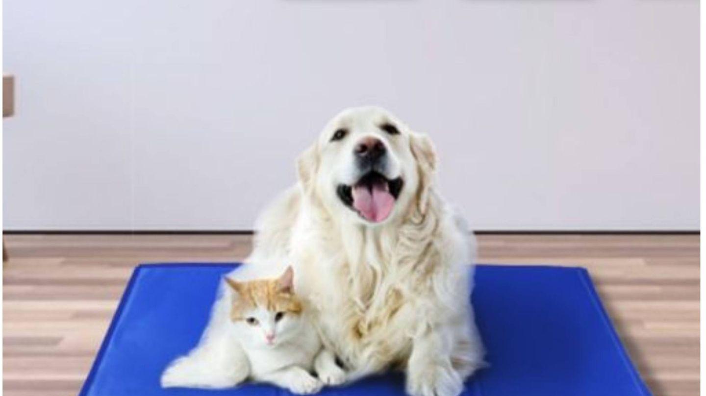 Ideas de Amazon para un verano 'de perros'. (Cortesía)