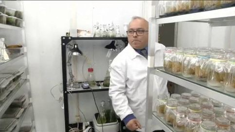 Estas plantas podrían ayudar a evitar las quemaduras por el sol