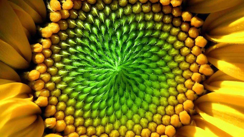 La naturaleza también sabe matemáticas (y más que tú)