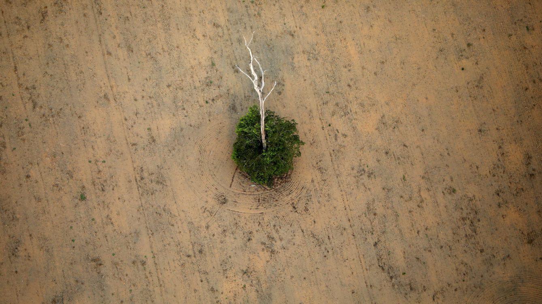 Foto: Foto aérea de la deforestación del Amazonas. (Reuters)