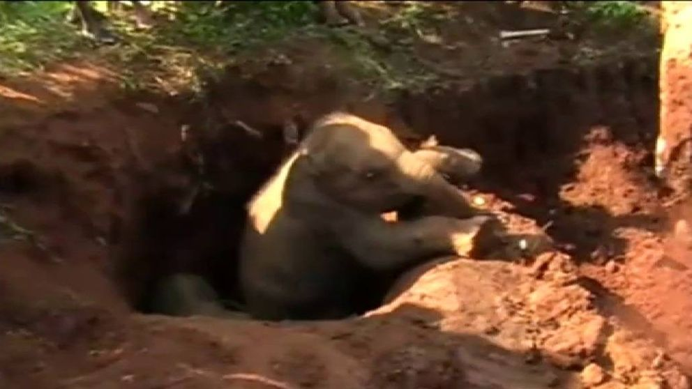 Rescatan a dos elefantes bebés en Sri Lanka después de pasar varias horas atrapados