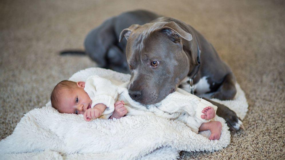 Foto: Un pit bull cuida de un bebé