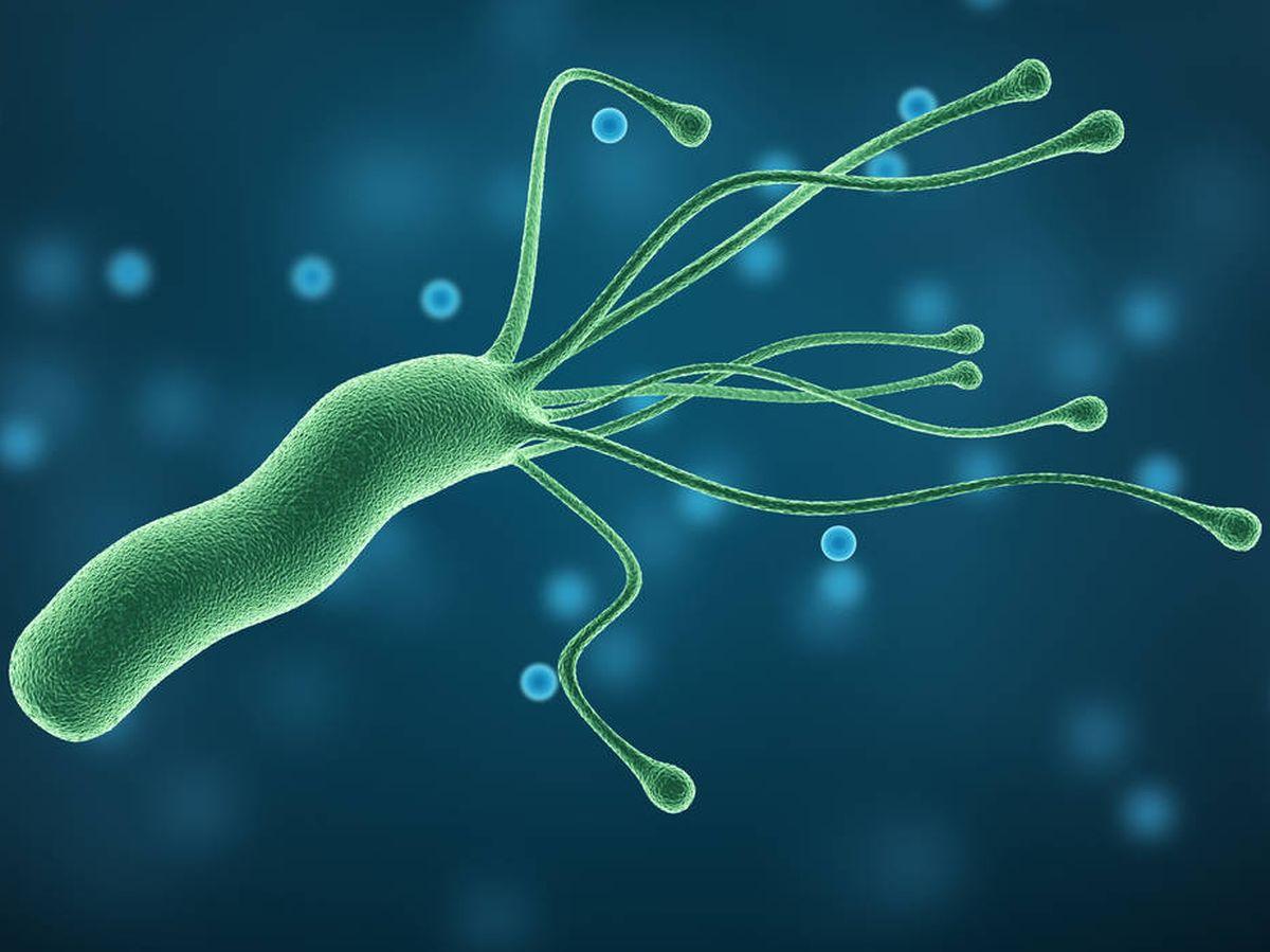 Descubren (al fin) por qué la Helicobacter pylori provoca cáncer ...