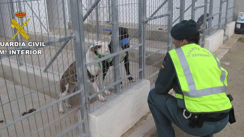 Muere un hombre tras ser atacado por cinco perros peligrosos en Beniarbeig, Alicante