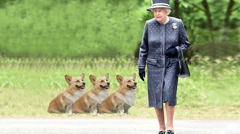 La reina Isabel no quiere más perros pues teme dejarlos solos cuando muera