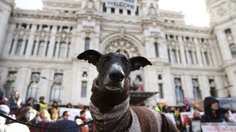 El Congreso aprueba que los animales no sean 'cosas': herencias, custodia y más dudas