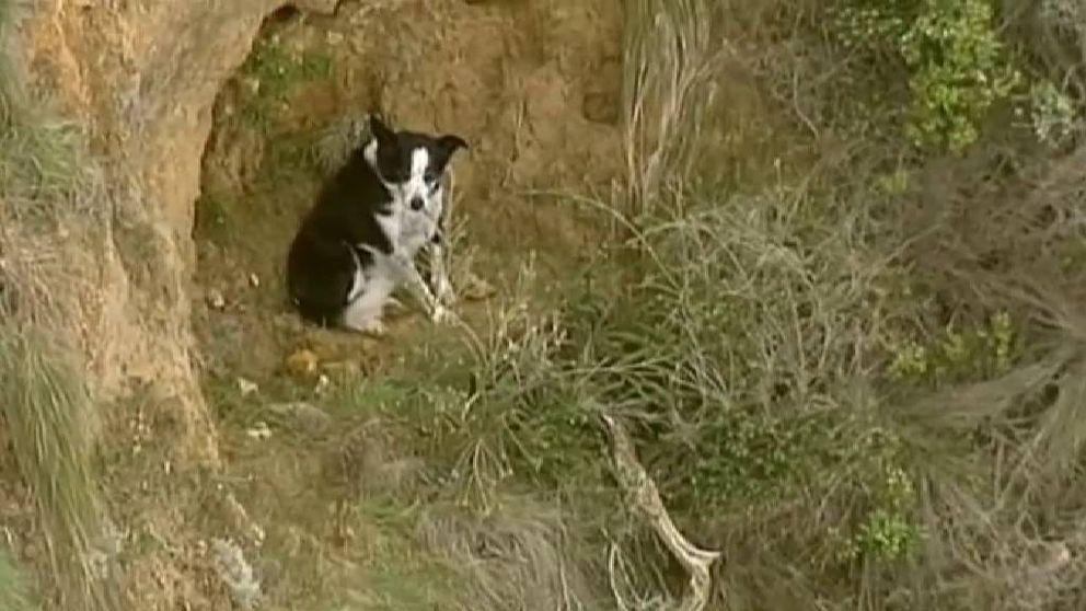 Así se salvó un perro atrapado en un acantilado en Australia