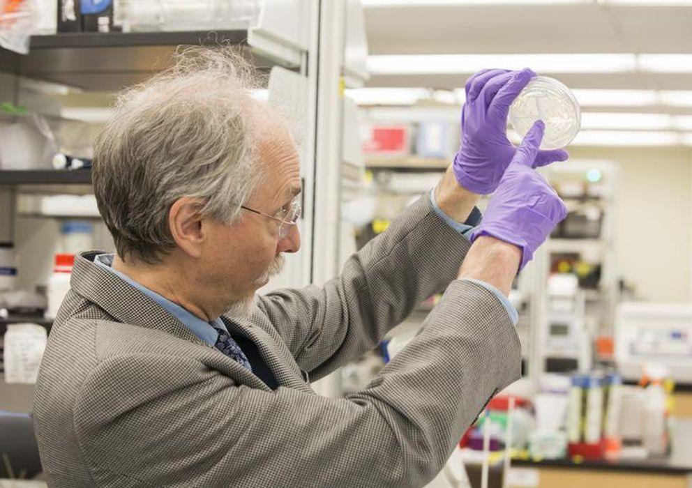 Foto: Jeff Boeke, con el cultivo de levaduras sintéticas. (NYU / SCIENCE)