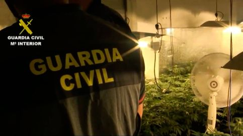Incautadas 1.500 plantas de marihuana en varias operaciones antidroga