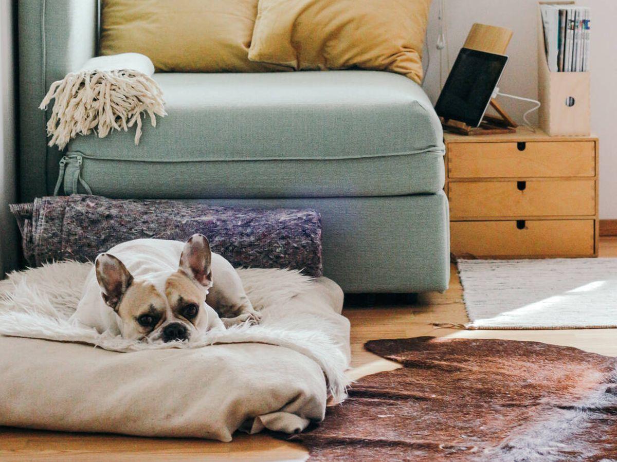 Foto: Ideas de decoración para mascotas en casa (Brina Blum para Unsplash)