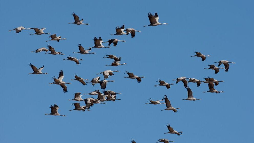 Resultado de imagen para La captura y la caza ilegal amenazan todavía a las aves silvestres en el mundo