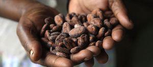 Foto: Comer mucho chocolate negro, el remedio más eficaz contra la tos crónica