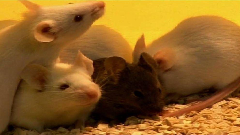 Logran devolver la vista a ratones ciegos