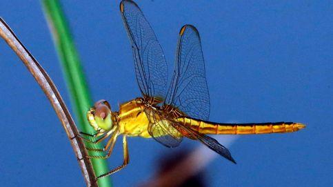 El hábitat de las libélulas