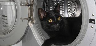 Post de Resucitan a un gato después de pasar 20 minutos dentro de una lavadora en uso