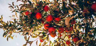 Post de La reinvención de la sidra: siete manzanas para inventar una nueva bebida
