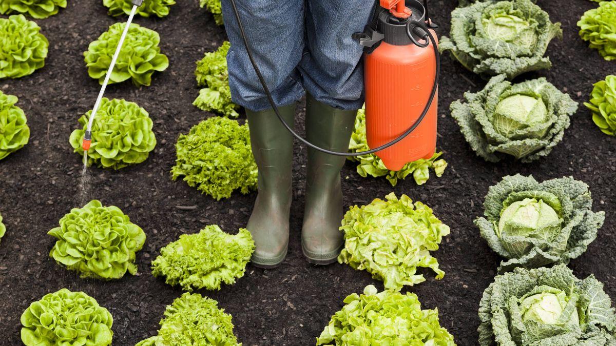 ¿Contiene la producción orgánica pesticidas?