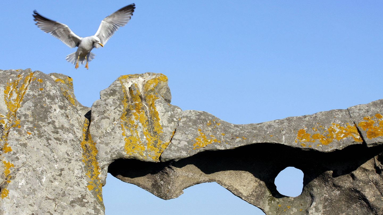 Las gaviotas son las grandes protagonistas de la fauna del parque. (Andoni Canela)