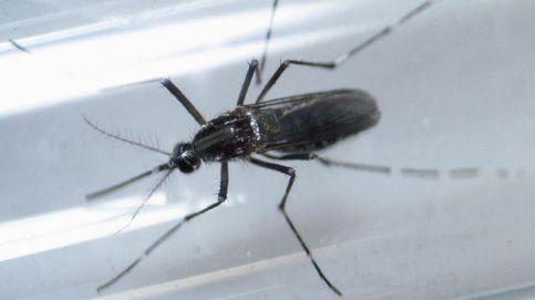 No hay peligro de contagio tras el primer caso de transmisión sexual de zika