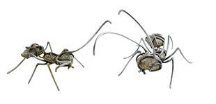 Post de Una hormiga (o varias) que es una obra de arte