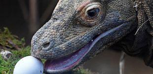Post de Indonesia cerrará la isla de Komodo para proteger a sus dragones autóctonos