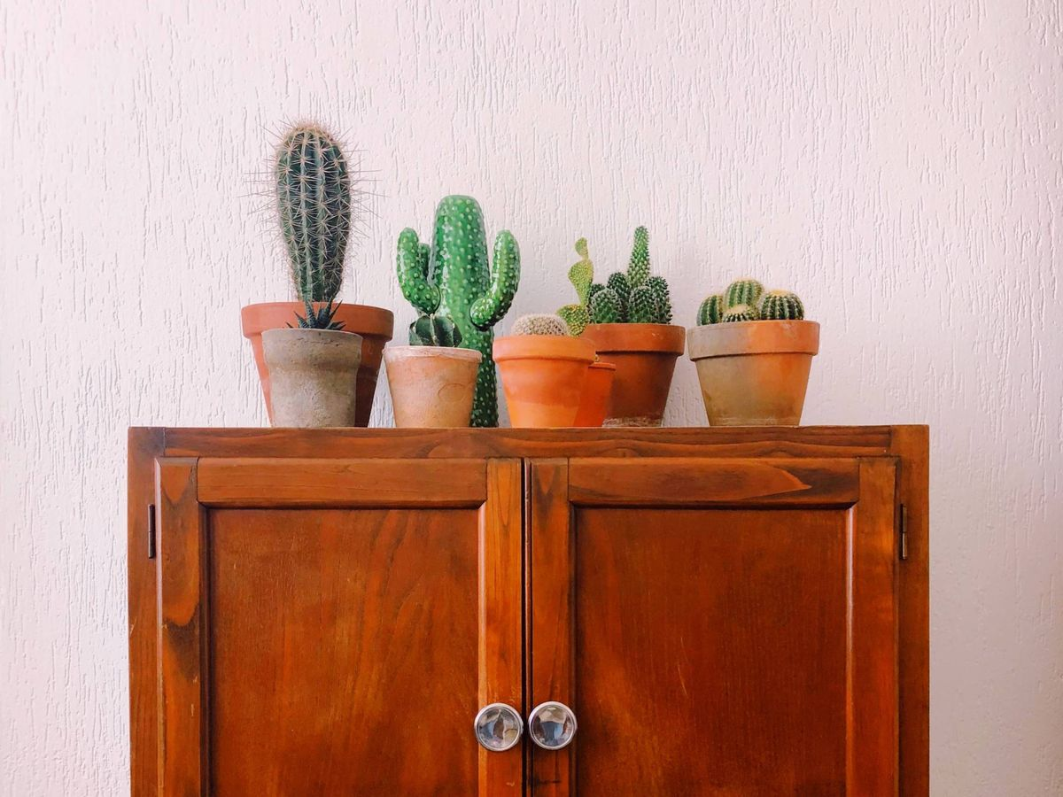 Foto: Esta es la lista de las 5 plantas más bonitas y resistentes para decorar tu hogar a lo largo de todo el año. (Cortesía)