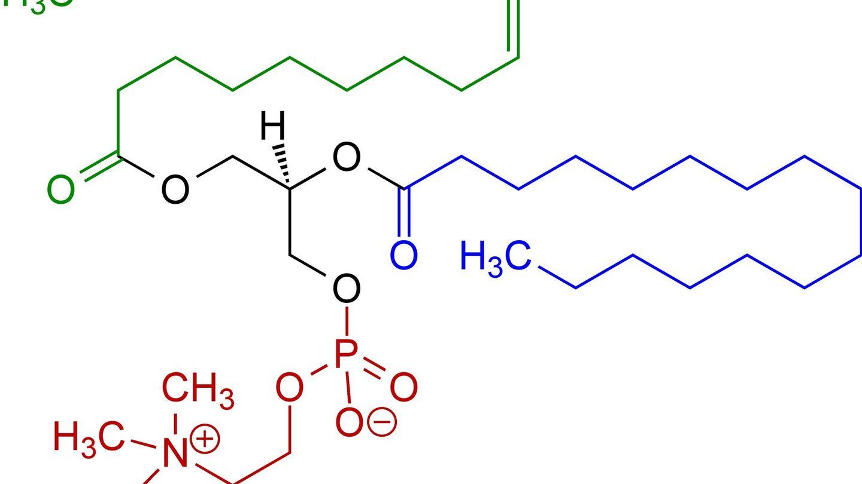 Estructura molecular de la lecitina.