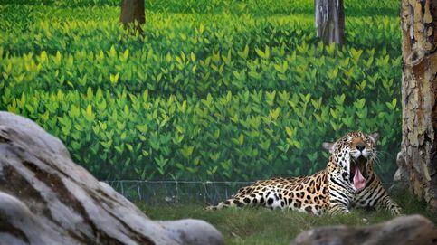 Animales en el zoo de Calcuta