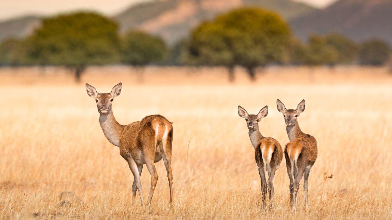 Parque Nacional de Cabañeros. ©Turismo Castilla-La Mancha. (David Blázquez)