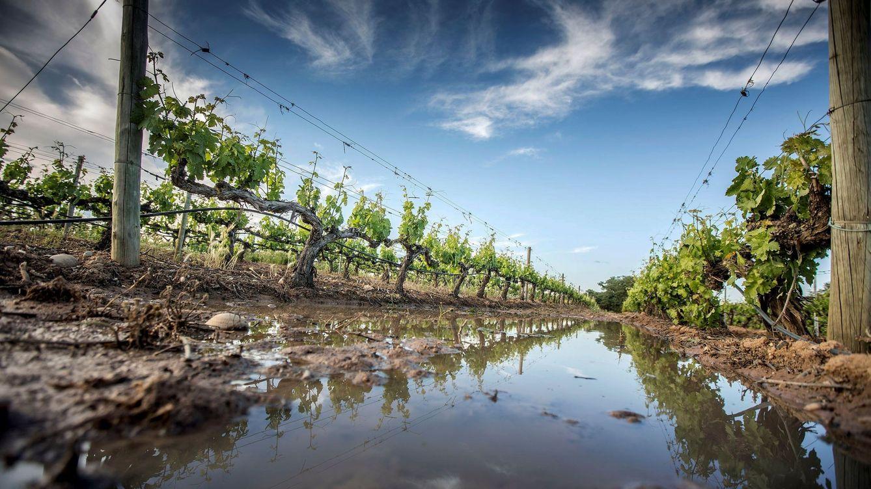 El vino de moda del Ibex cuesta menos de 20 euros
