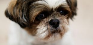 Post de Matan a una perra completamente sana para enterrarla con su dueña
