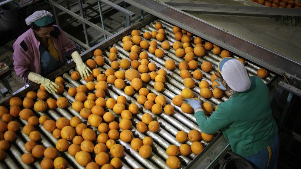 Foto: Planta de procesado de naranja en Sevilla. (C. P.)