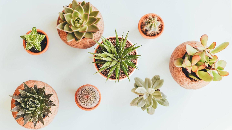 Plantas para llenar tu casa de energía positiva. (Annie Spratt para Unsplash)