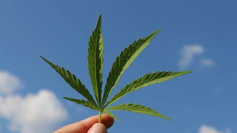 Los españoles, divididos sobre la legalización de la marihuana (según el CIS)