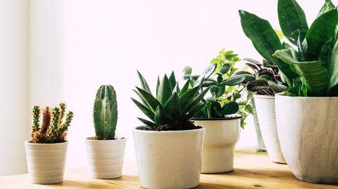 Plantas en vacaciones: los mejores trucos para regarlas y que no se mueran