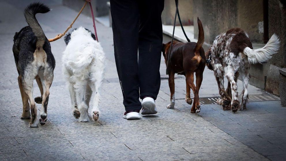El país que prohíbe salir en cuarentena a pasear a los perros