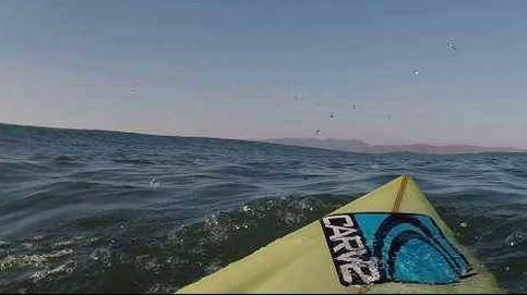 Fue a coger una ola... y se encontró con un tiburón