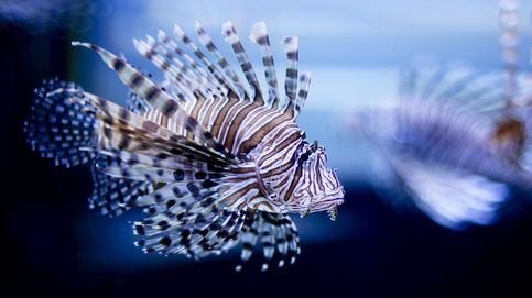 Belleza invasora en los ecosistemas marinos
