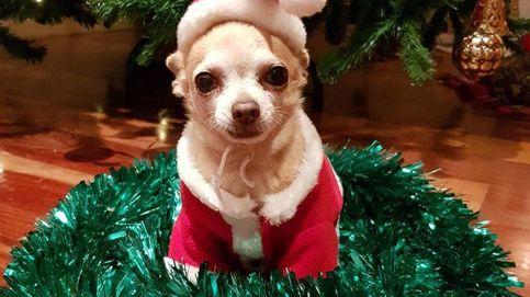 Mowgly, el perro de Paula Echevarría, la estrella de sus Navidades