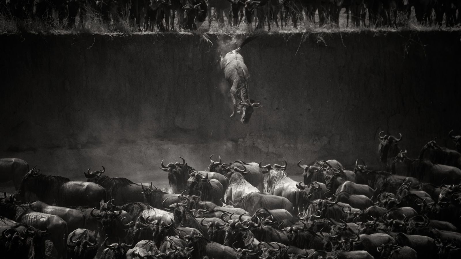 más en La cuarenta Animales: salvaje naturaleza imágenes