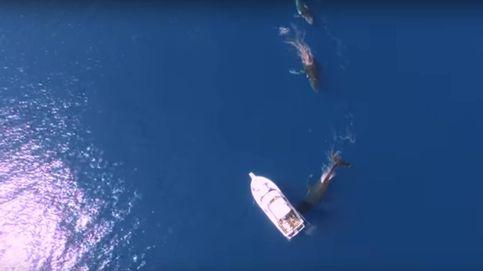 Las imágenes más espectaculares captadas desde el aire a vista de dron
