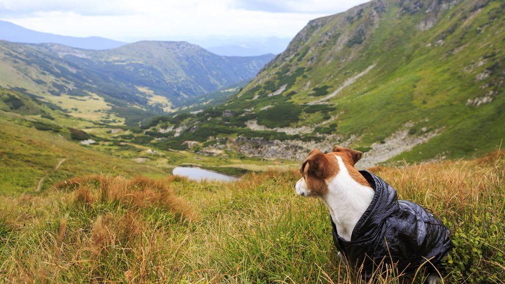 Cómo encuentran los perros el camino de vuelta a casa (sin tener GPS)