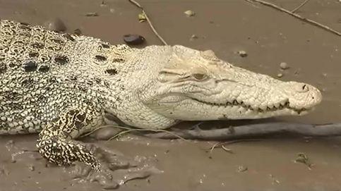 Este es Pearl, el extraño cocodrilo albino que han descubierto en Australia