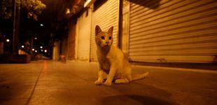 Post de Piden un año de cárcel para un joven que prendió fuego a una gata