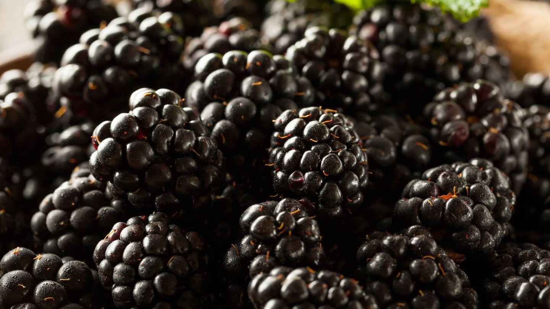 Fresh Raw Organic Blackberries in a Bowl